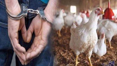 سرقة دجاجة تجر 3 أشخاص إلى عقوبة قد تصل إلى 20 سنة سجنا 6