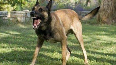 كلب مسعور يتهجم على 5 أشخاص من بينهم طفلة بالشاون 2
