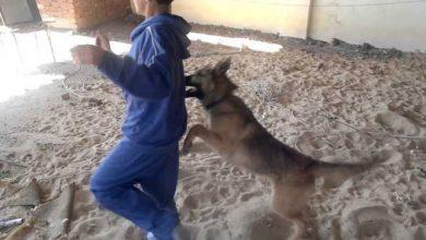 إقليم العرائش...بعد تعرضه لعضات كلب مسعور طفل يلفظ أنفاسه أمام ذهول الجميع 3