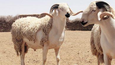 بشرى للمغاربة...خمسة ايام هي عطلة عيد الأضحى 6
