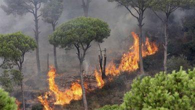 المغرب فقد أزيد من 200 هكتار من الغابات خلال سنة 2019 5