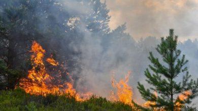 السلطات تسارع الزمن للسيطرة على حريق بإقليم شفشاون 2