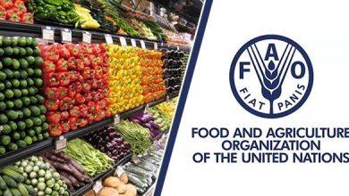 الفاو: أسعار الأغذية العالمية تتراجع  للشهر الثاني على التوالي 2