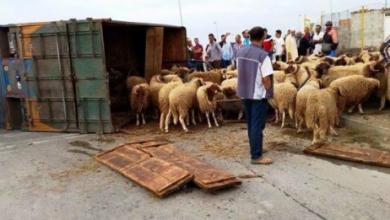 وقوع قتلى وجرحى إثر انقلاب شاحنة محملة بأكباش العيد 6