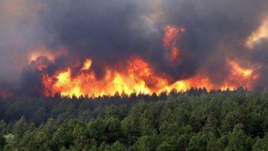 حريق يلتهم 65 هكتارا من الغطاء الغابوي بشفشاون 5