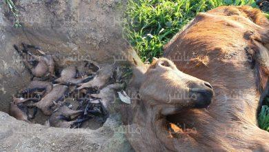 هل تتحمل ONSSA مسؤولية نفوق عشرات الماعز بضواحي طنجة؟ 3