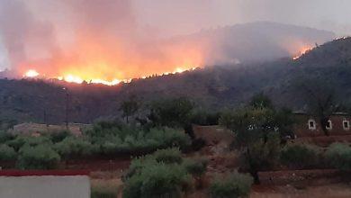 بعد الحرائق المتوالية..إطلاق مشروع لتشجير 450 هكتار بالدريوش 3