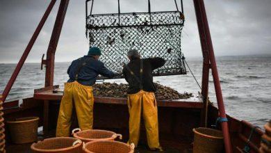 نشاط الصيد مستمر وتعزيز منتظر للعرض خلال الفترة المقبلة 4