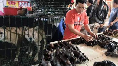 بعد رفع الحظر..تجارة الكلاب والخفافيش تنتعش من جديد في الصين 2
