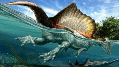 """اكتشاف أول ديناصور مائي في العالم """"مغربي الجنسية"""" 3"""
