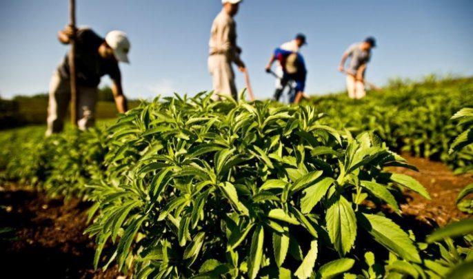 توقعات بإنتاج أزيد من 770 ألف طن من الخضروات بجهة طنجة 1