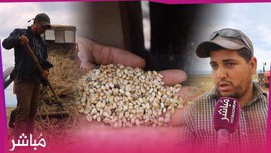 شاهد كيف تتم عملية حصد القمح والشعير بإقليم الدريوش 1