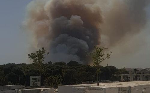 حريق الغابة الديبلوماسية أتى على 36 هكتارا من الغطاء الغابوي 1