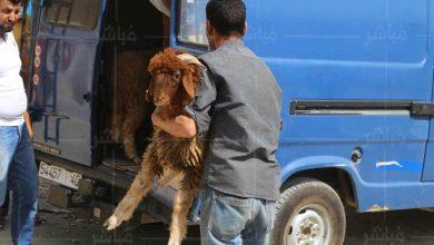 قبل يومين من العيد..السلطات تقرر إغلاق سوق الماشية بطنجة 5