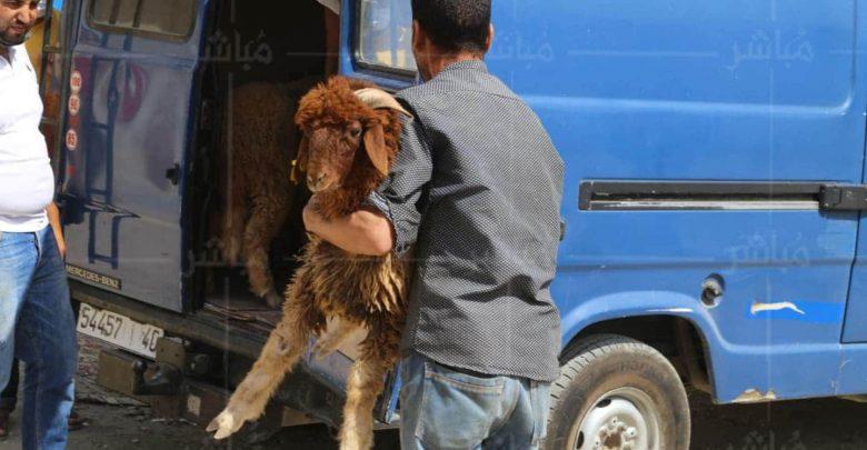 قبل يومين من العيد..السلطات تقرر إغلاق سوق الماشية بطنجة 1