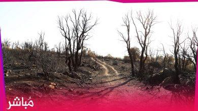 حريق بني عروس أتى على مئات الهكتارات من الغطاء الغابوي 2