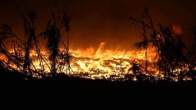 """حريق يلتهم غابة """"زومي"""" بإقليم وزان 2"""