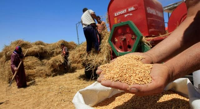 تراجع إنتاج الحبوب بالمغرب بحوالي 40 في المائة 1