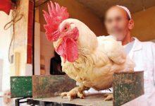 جمعية مربي الدواجن تكشف سبب ارتفاع أسعار الدجاج 10