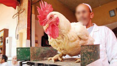 جمعية مربي الدواجن تكشف سبب ارتفاع أسعار الدجاج 5