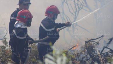 سلطات طنجة تسارع الزمن للسيطرة على حريق بغابة الشجيرات 5