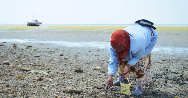 وزارة الفلاحة ترفع الحظر عن جمع الصدفيات بالمضيق ومرتيل 1