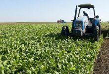وزارة الفلاحة: أشغال توزيع الزراعات مستمرة وفقا للبرامج المحددة 10