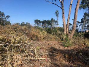 مشروع بناء فيلات فخمة يخترق غابة الرميلات بطنجة 2