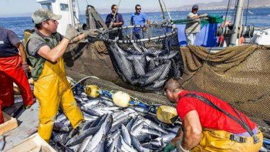 تراجع في منتوجات الصيد البحري بنسبة 4 في المائة 3