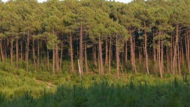 برمجة 000 600 هكتار من تشجير الغابات بحلول عام 2030 2