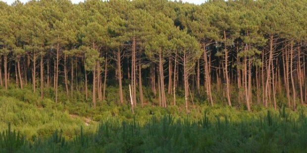 برمجة 000 600 هكتار من تشجير الغابات بحلول عام 2030 1