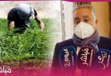 """نبيل بنعبد الله: الدولة قامت بخطوة جريئة لتقنين نبتة """"الكيف"""" 7"""
