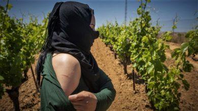 إسبانيا..تبرئة صاحب مزرعة فراولة من تهمة التحرش بعاملات مغربيات 5