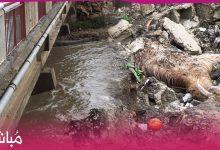مشاهد صادمة من مخلفات فيضانات القصر الصغير 2