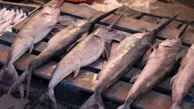 طنجة..توقيف نشاط صيد سمك أبو سيف لمدة خمسة أيام 3