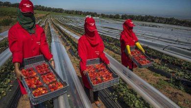 اتفاق مغربي إسباني لتسهيل عودة عاملات الفراولة المغربيات 2