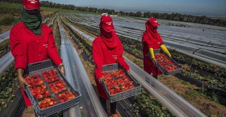 اتفاق مغربي إسباني لتسهيل عودة عاملات الفراولة المغربيات 1