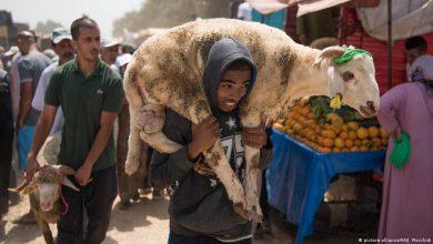 أونسا: عيد الأضحى مر في ظروف جيدة على مستوى الجودة والصحة الحيوانية 4