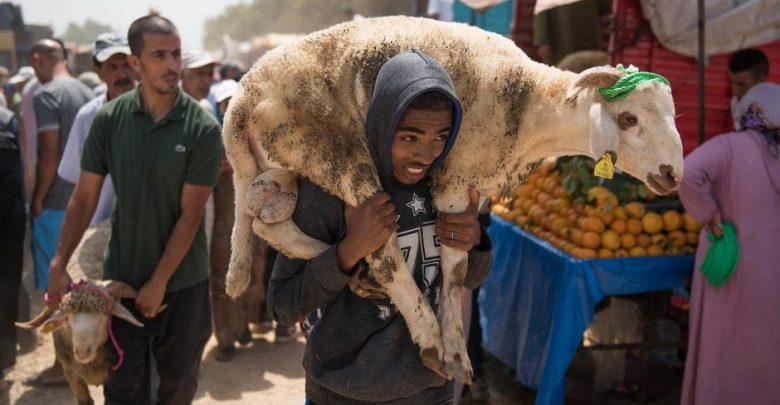 أونسا: عيد الأضحى مر في ظروف جيدة على مستوى الجودة والصحة الحيوانية 1