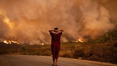 غابات.. انخفاض المساحة المتضررة من الحرائق بـ47 في المائة 5
