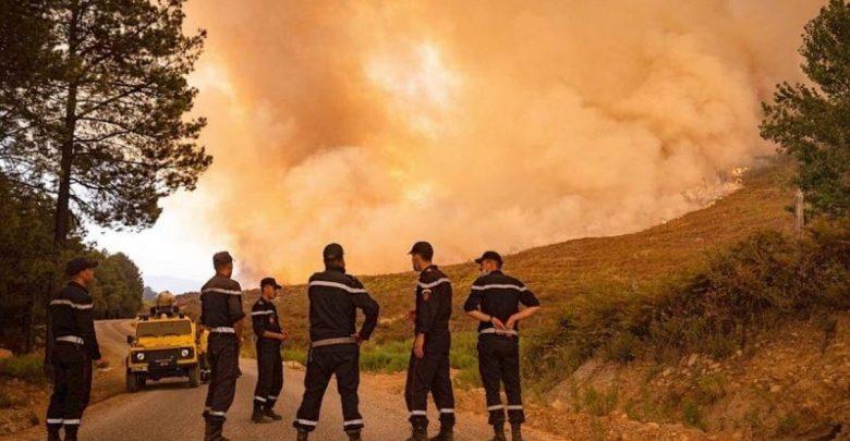 """بعدما التهمتها النيران..مشروع لتأهيل غابة """"سوكنا""""  بشفشاون عبر تشجير وتخليف 1100 هكتارا 1"""