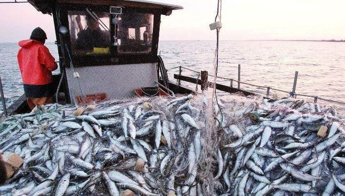 ارتفاع قيمة منتجات الصيد البحري المسوقة بموانئ الشمال 1