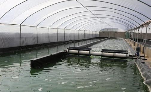 مزارع لتربية الطحالب تخرج إلى الوجود بسواحل شفشاون 1